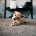 5 Tips on Choosing a Family and Pet-Friendly Carpet